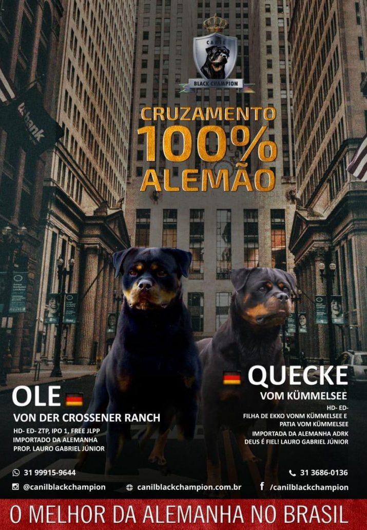 ole-e-quecke-728x1030